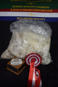 Honeyfield Simply Sizzling - eilite white female alpaca